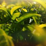 plantes et fontaine jouvence