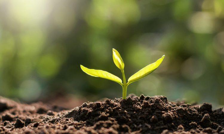 plante qui sort de la terre