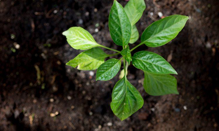 plantes dans la terre vu de haut