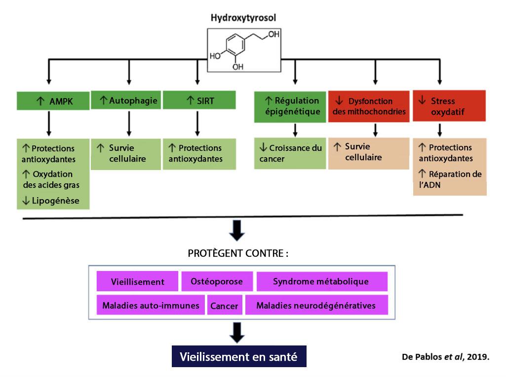 tableau bénéfices hydroxytyrosol