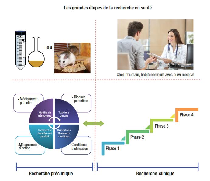 graphique présentant les grandes étapes de la recherche en santé