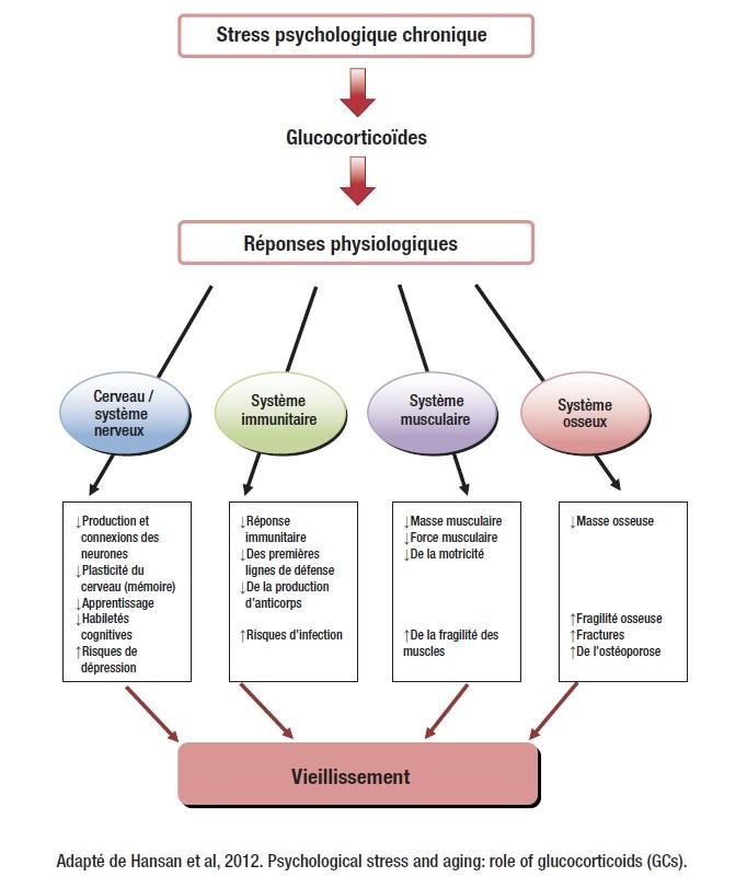 graphique stress chronique